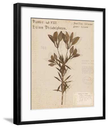 Wild Orange Lily-H. T. Shores-Framed Giclee Print