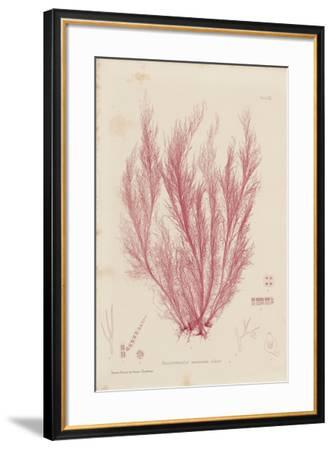 Polysiphonia-Henry Bradbury-Framed Giclee Print