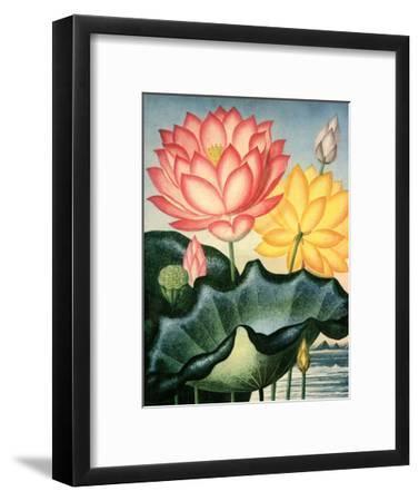 Botanical Print, The Sacred Egyptian Bean-Peter Charles Henderson-Framed Art Print