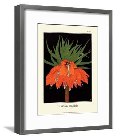 Botanical Print, Crown Imperial, 1905-Luite Klaver-Framed Art Print