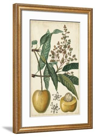 Exotic Fruits III-Turpin-Framed Giclee Print