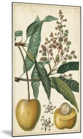 Exotic Fruits III-Turpin-Mounted Giclee Print