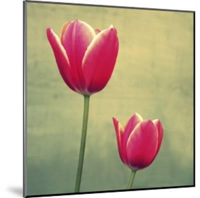 Tulip in Fuchsia II-Lillian Bell-Mounted Art Print