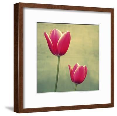 Tulip in Fuchsia II-Lillian Bell-Framed Art Print
