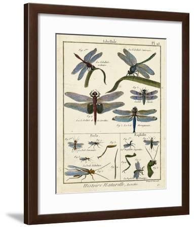 Histoire Naturelle Insects I-Diderot-Framed Giclee Print