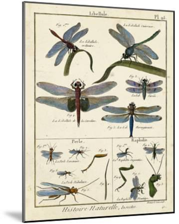Histoire Naturelle Insects I-Diderot-Mounted Giclee Print