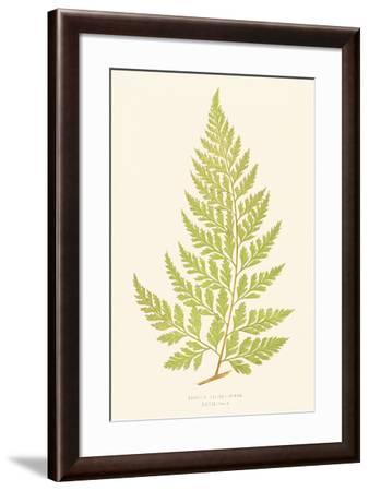 Davallia Solida-Edward Joseph Lowe-Framed Giclee Print