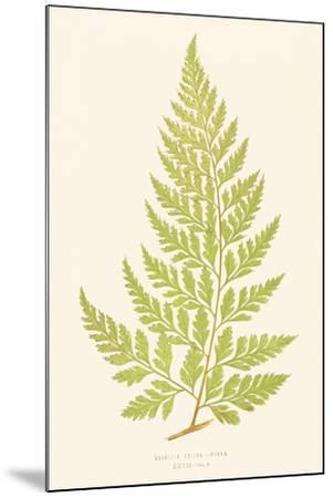 Davallia Solida-Edward Joseph Lowe-Mounted Giclee Print