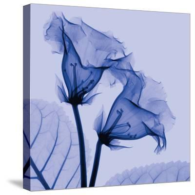 Gloxinia-Steven N^ Meyers-Stretched Canvas Print