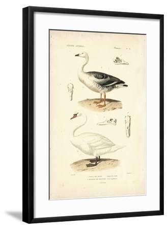 Antique Swan Study-N^ Remond-Framed Giclee Print