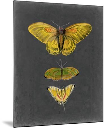 Butterflies on Slate I-Naomi McCavitt-Mounted Giclee Print