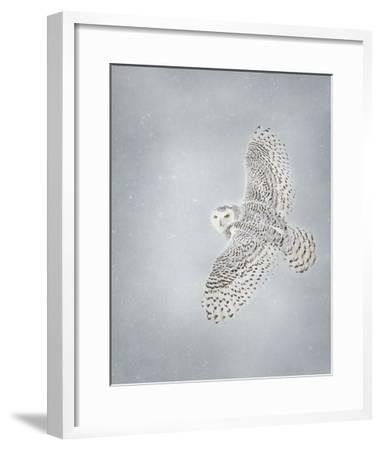 Owl in Flight II-PHBurchett-Framed Art Print
