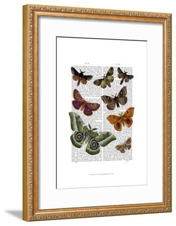 Moth Plate 2-Fab Funky-Framed Art Print