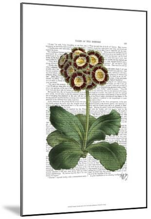 Primula Auricula Red-Fab Funky-Mounted Art Print