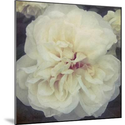 Ivory Petals-Collezione Botanica-Mounted Giclee Print