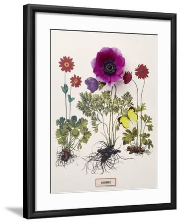 Floral Decoupage - Anemone-Camille Soulayrol-Framed Giclee Print