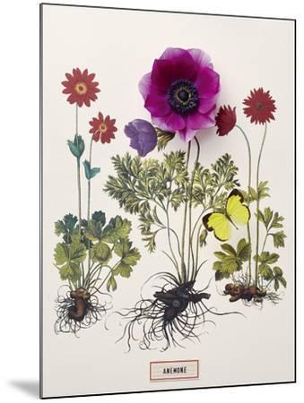Floral Decoupage - Anemone-Camille Soulayrol-Mounted Giclee Print