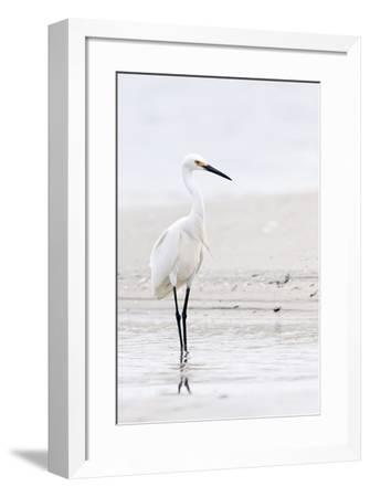 Beach Egret-Wink Gaines-Framed Giclee Print