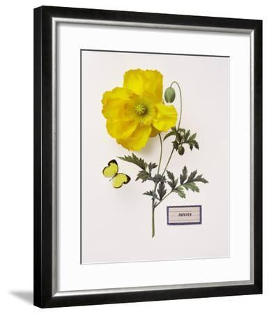 Floral Decoupage IV-Camille Soulayrol-Framed Giclee Print