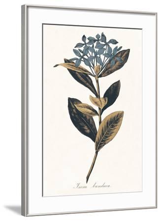 Ixora Banduca - Golden-A^ Poiteau-Framed Giclee Print
