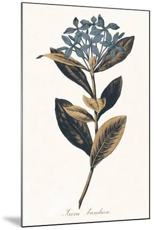 Ixora Banduca - Golden-A^ Poiteau-Mounted Giclee Print