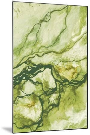 Ecology II-Peter Adams-Mounted Giclee Print
