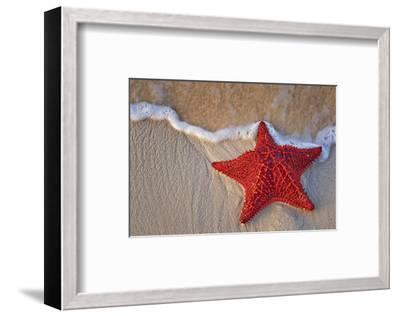 Bahama Starfish on the Beach--Framed Art Print