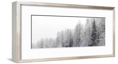 Winter Pines-Mikhaylov-Framed Art Print