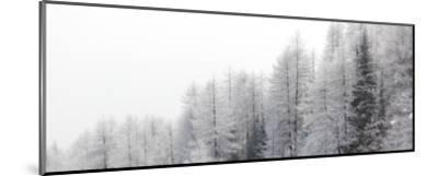 Winter Pines-Mikhaylov-Mounted Art Print
