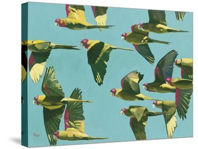 Parrots in Flight - Retro-Pete Hawkins-Stretched Canvas Print