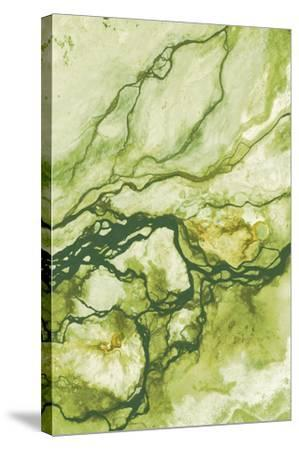 Ecology II-Peter Adams-Stretched Canvas Print