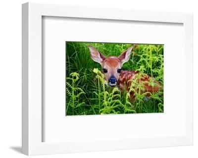 Newborn Whitetail Fawn Resting--Framed Art Print