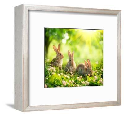Rabbits Sunny Flower Meadow--Framed Art Print