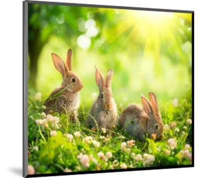 Rabbits Sunny Flower Meadow--Mounted Art Print
