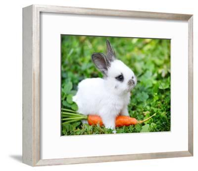 White Rabbit With a Carrot--Framed Art Print