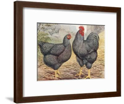 Plymouth Rocks-J. W. Ludlow-Framed Premium Giclee Print