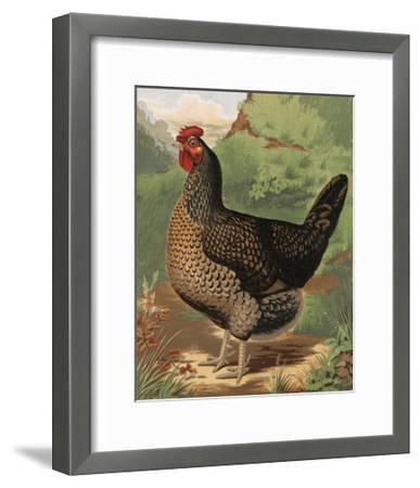 Mr. John Martin's Single Combed Dorking Hen-J. W. Ludlow-Framed Premium Giclee Print