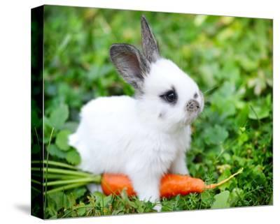 White Rabbit With a Carrot--Stretched Canvas Print