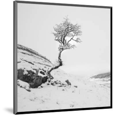 The Winter Tree--Mounted Art Print