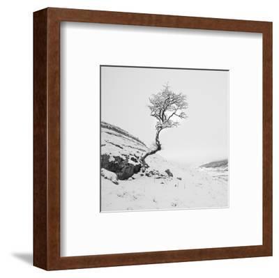 The Winter Tree--Framed Art Print