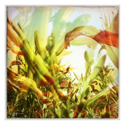 Field of flowers I-Jean-Fran?ois Dupuis-Framed Art Print