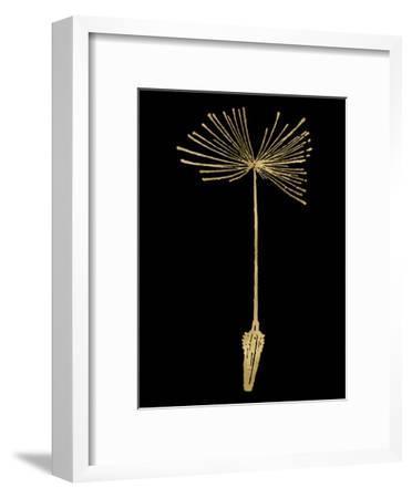 Dandelion 1 Golden Black-Amy Brinkman-Framed Art Print