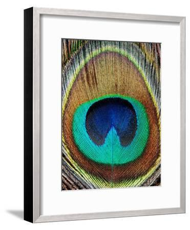 Peacock Feather-LILA X LOLA-Framed Art Print