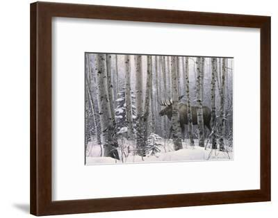 A Walk in the Woods-Stephen Lyman-Framed Art Print