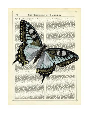Angled Butterfly-Marion Mcconaghie-Framed Art Print