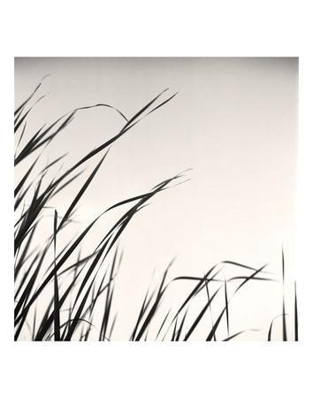 Beaver Pond, Study #1-Andrew Ren-Framed Art Print