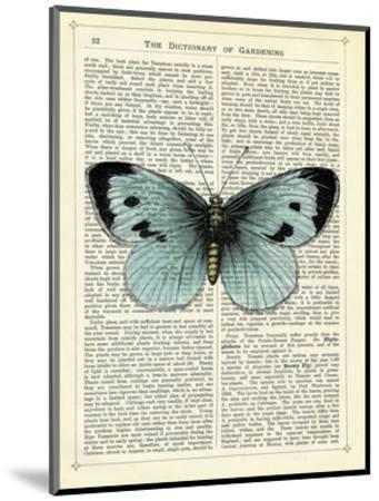 Blue Butterfly-Marion Mcconaghie-Mounted Art Print