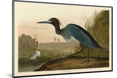Blue Crane or Heron-John James Audubon-Mounted Art Print