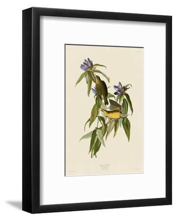 Connecticut Warbler-John James Audubon-Framed Art Print