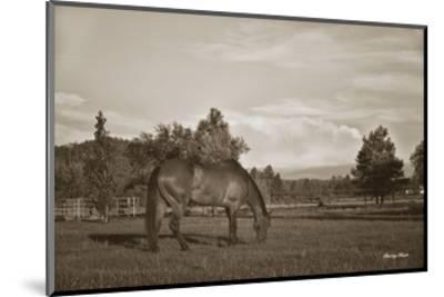 Copenhagen in Pasture-Barry Hart-Mounted Art Print